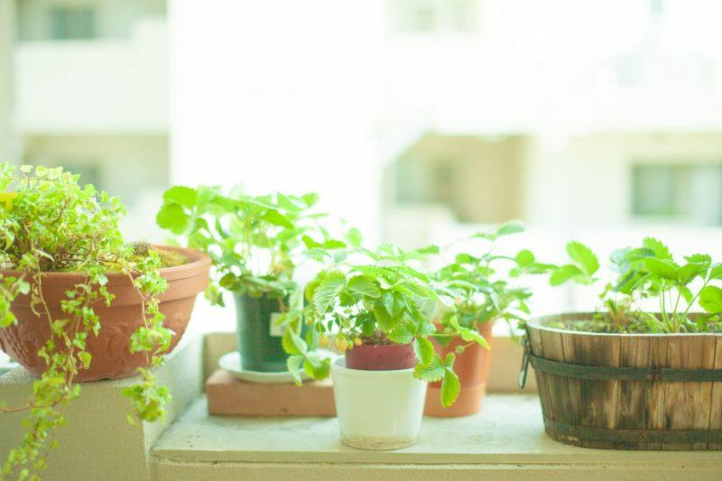 朝の光を浴びた観葉植物たち