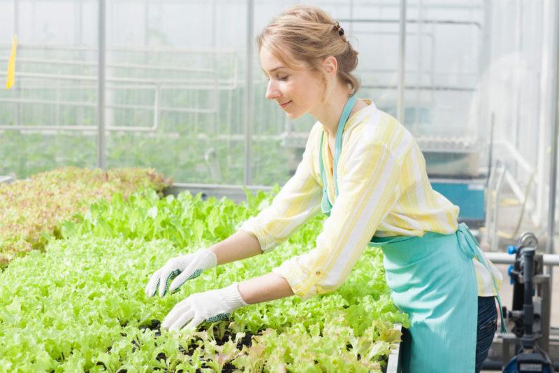 ビニールハウスで植物を作っている女性