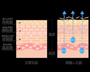 新陳代謝の肌断面