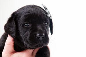 黒い毛の犬