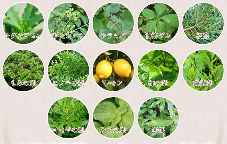 さまざまな植物