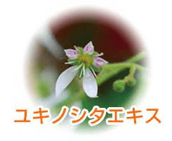 ユキノシタエキス画像