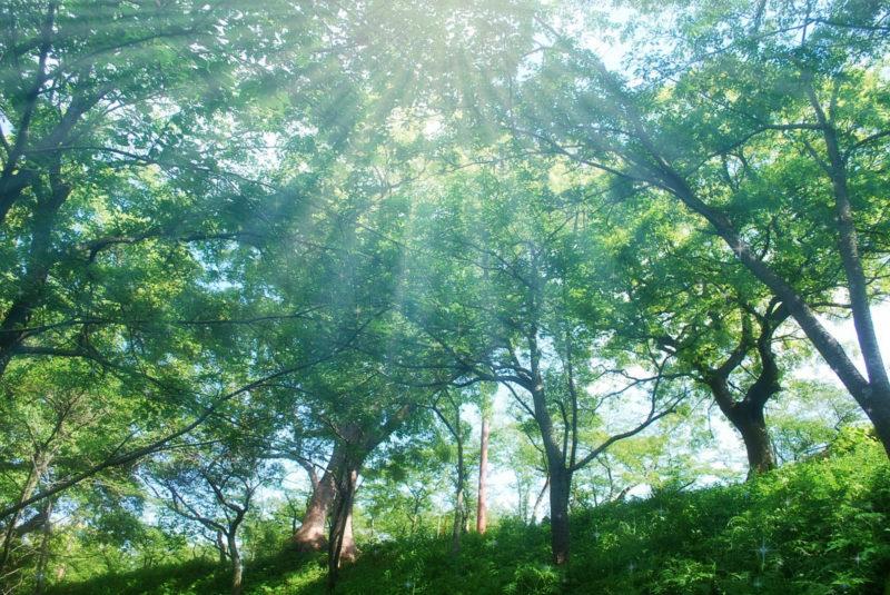 木漏れ日と春の森