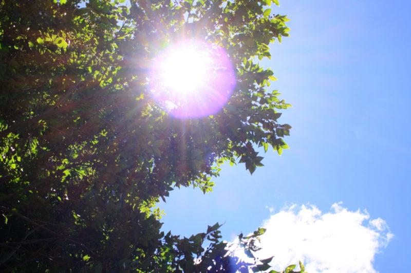 日差しの強い日