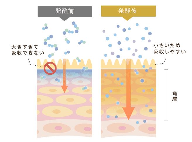 玄米X発酵画像