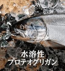 王妃の白珠鮭の画像