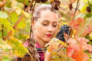 ブドウ狩りをしている外国人女性