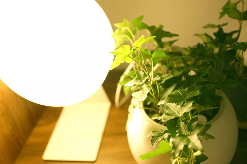 観葉植物を照らしているライト