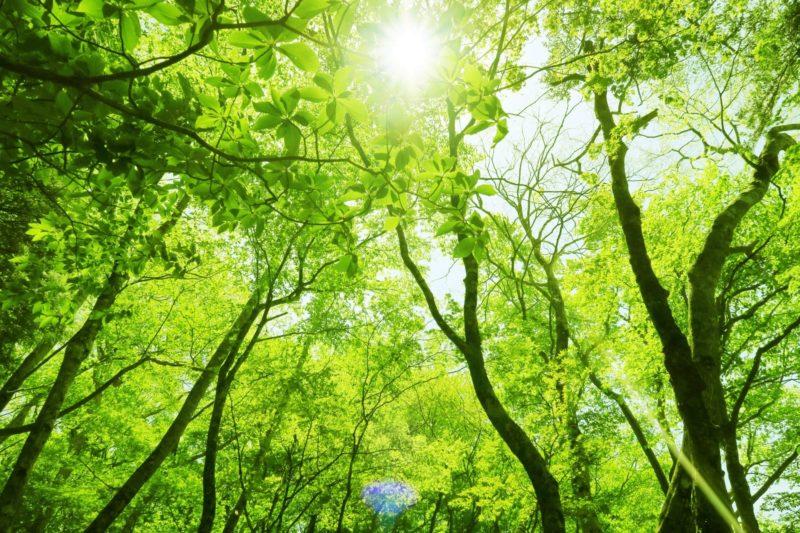 新緑と太陽画像
