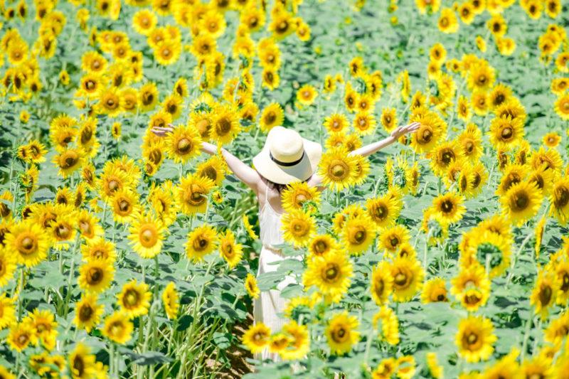 向日葵畑にいる帽子を被った女性