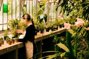 草花を手入れしている花屋の外国人女性