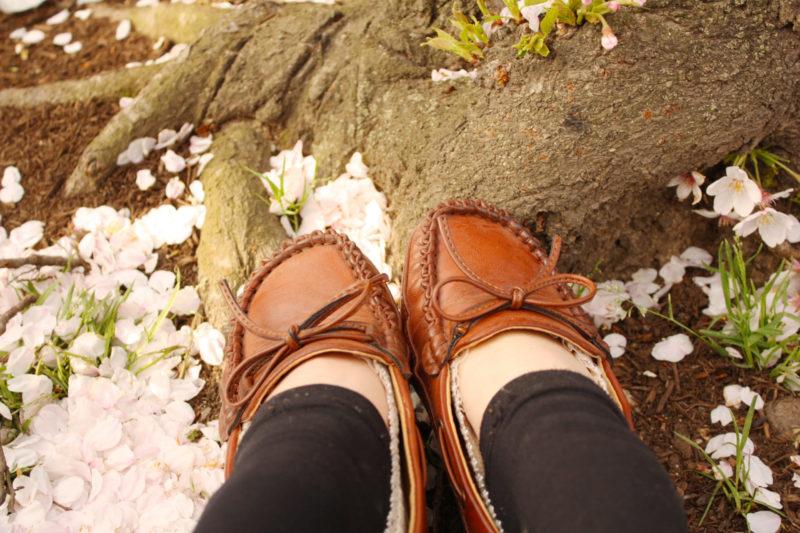 散った桜と女性のブラウンの靴