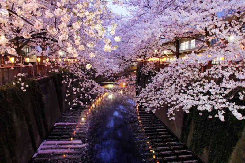 川が流れ両側に宿がある桜並木