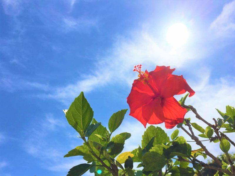 ハイビスカスと夏の空