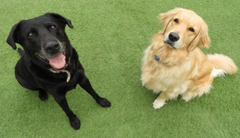 お座りしている黒い犬と茶色の犬