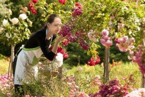 多くのバラや花を育てていて花の匂いを嗅いでいる女性