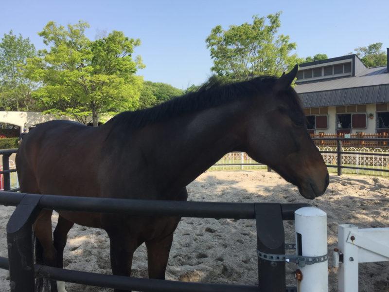 動物園に飼育されている1頭の馬