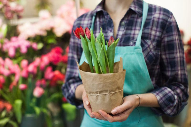 赤いチューリップの鉢植えを持っている女性