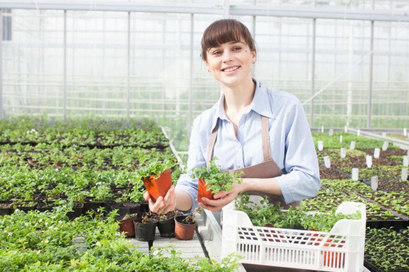 ビニールハウスでオーガニックな植物を育てている女性