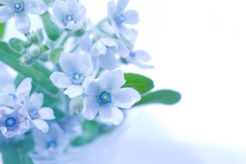 横にさりげなく咲いている青い花
