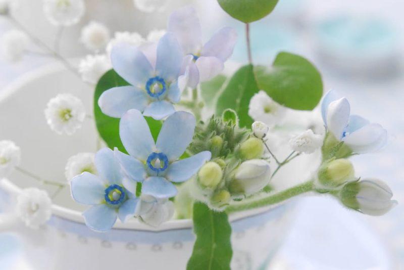 青と白の可憐な花達