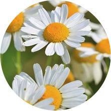 グレースホワイト・カモミレエキスのイメージ