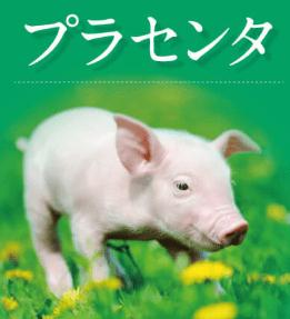 マシロップ豚画像