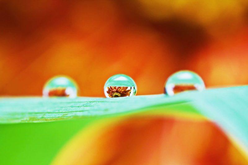 葉っぱの上の水滴に映る花