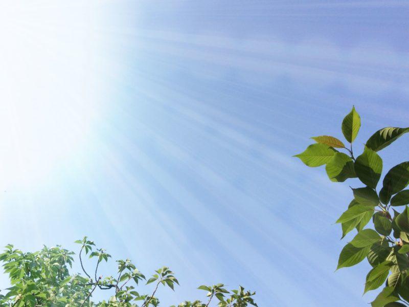 木々にサンサンと光が当たっている写真