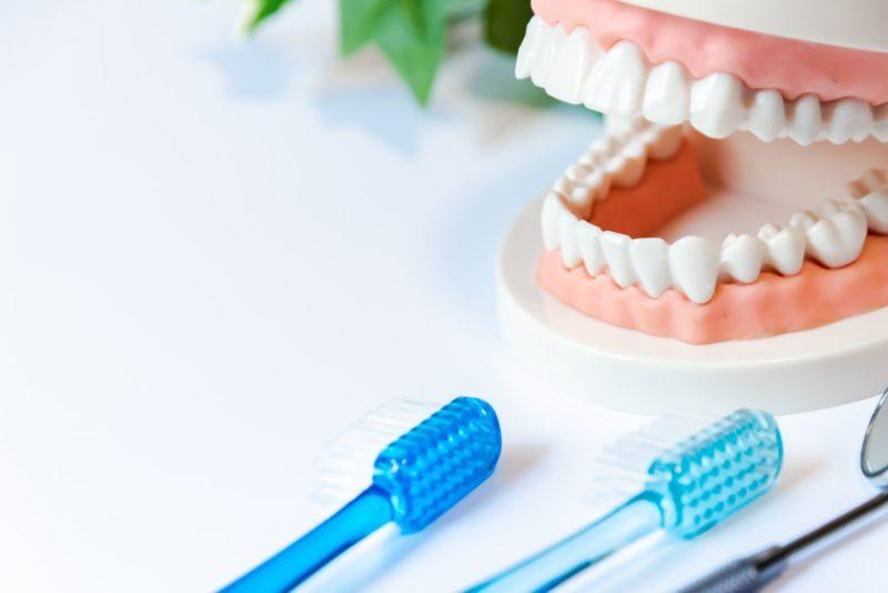 歯磨きの仕方を歯の模型で表している図