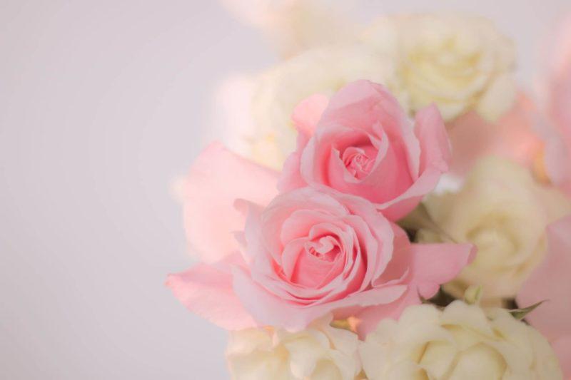 淡いピンク色の薔薇の花