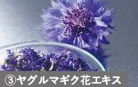 ヤグルマギク花エキス