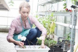 ビニールハウスで花の植え替えをしている女性