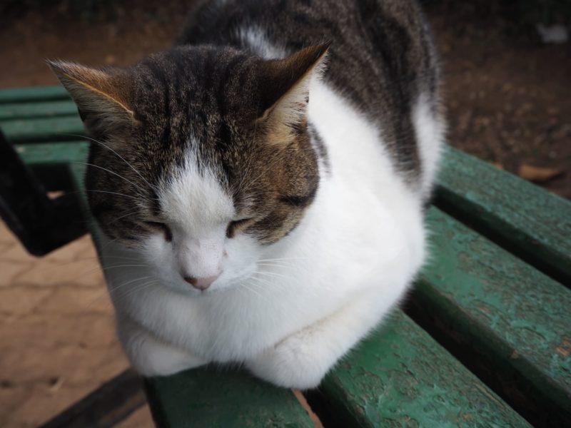 ベンチの上にいる白とチャコールグレーの猫