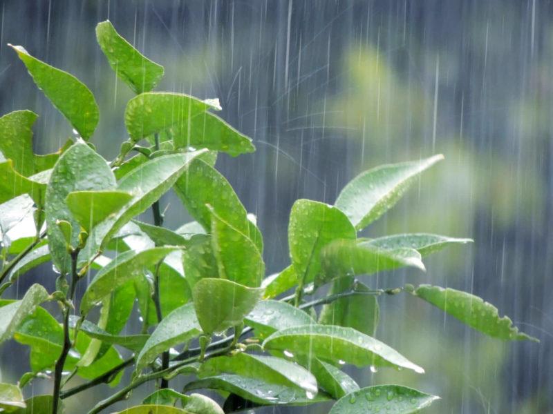雨の梅雨時の写真