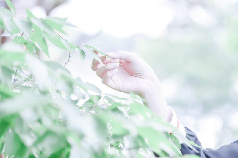 森の中緑色の葉っぱを一枚つかんでいる女性の右手の画像