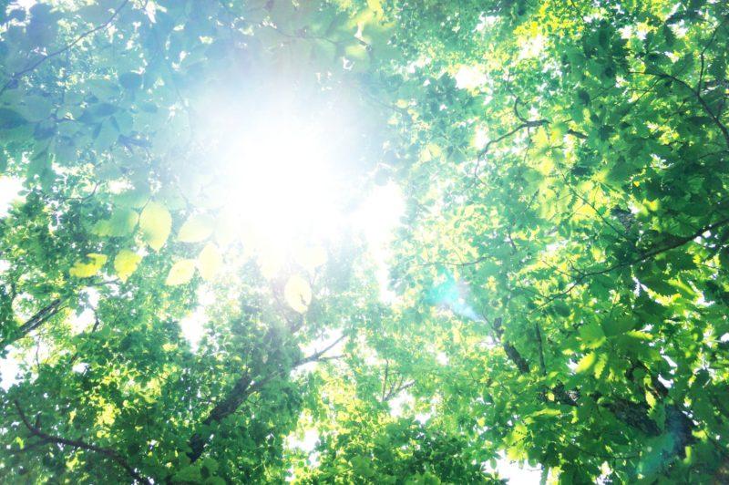 木漏れ日の中で日差しが強く差している森