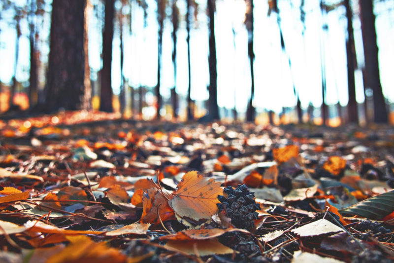 陽の光が当たった森にたくさん落ち葉があるところ