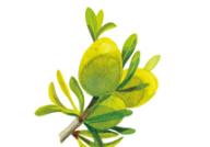 ソラブドウ成分3