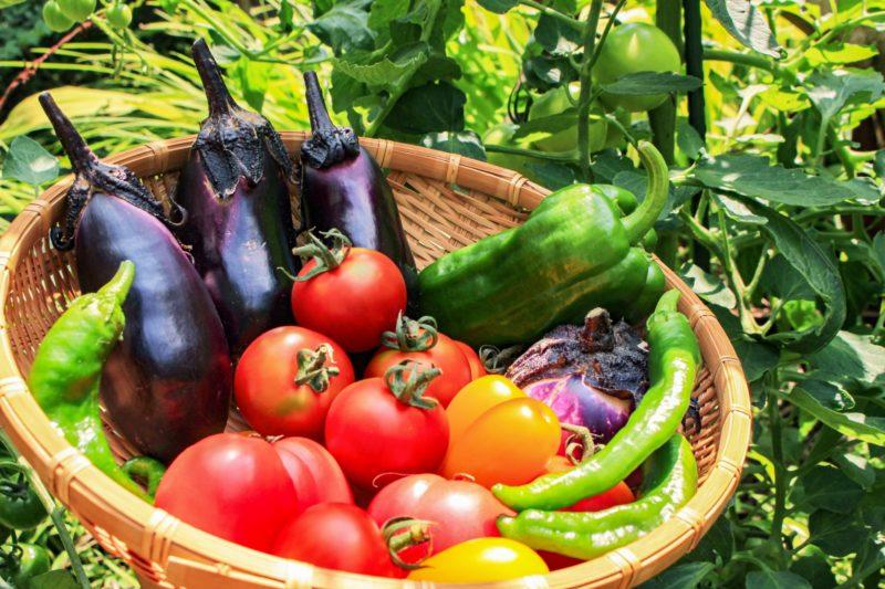 ざるの上に並べた野菜