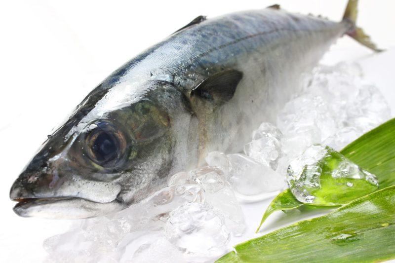 氷の上に乗っている生きのいい青魚