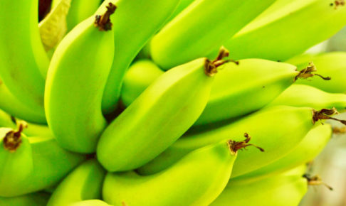 気になっているままのバナナ