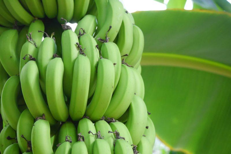 気になったままの青いバナナ