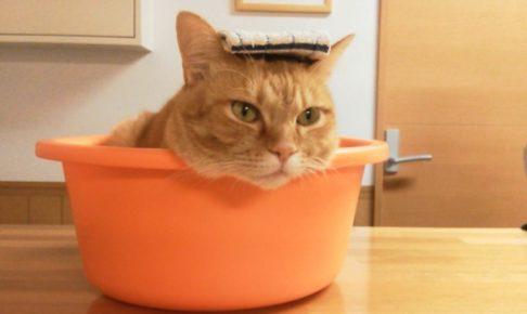 猫が温泉に入るの図