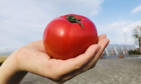 美白と美肌に手づくりトマトレシピ 表紙