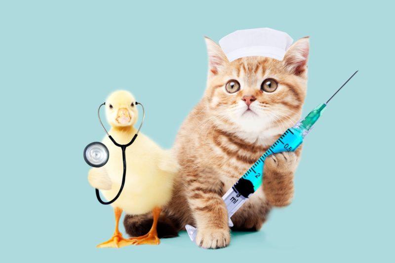 ヒアルロン酸の効果で四十肩の悩みを解決しよう 動物のお医者さん