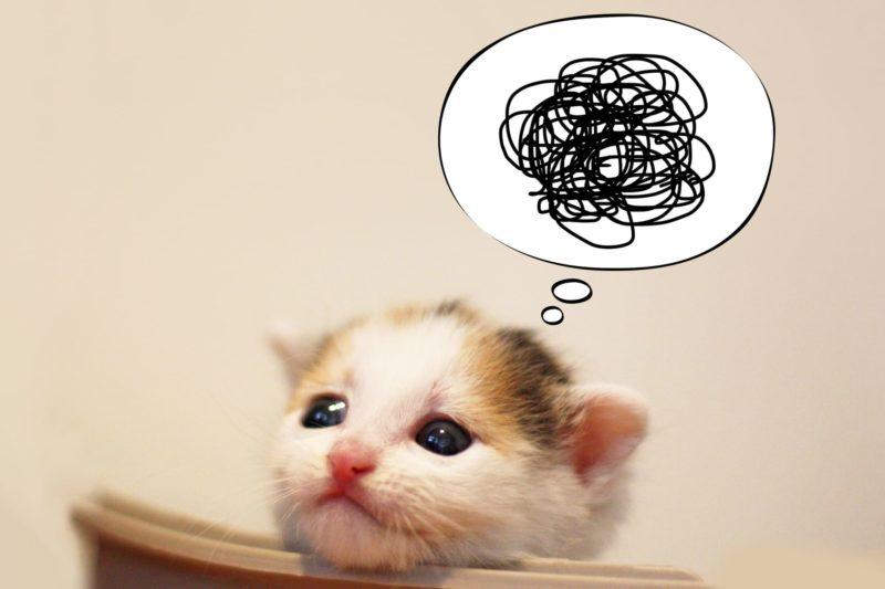 授乳とコラーゲン 猫の赤ちゃん