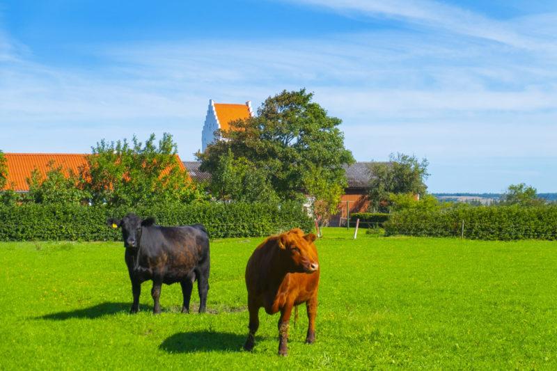 コラーゲンとは 牛さん