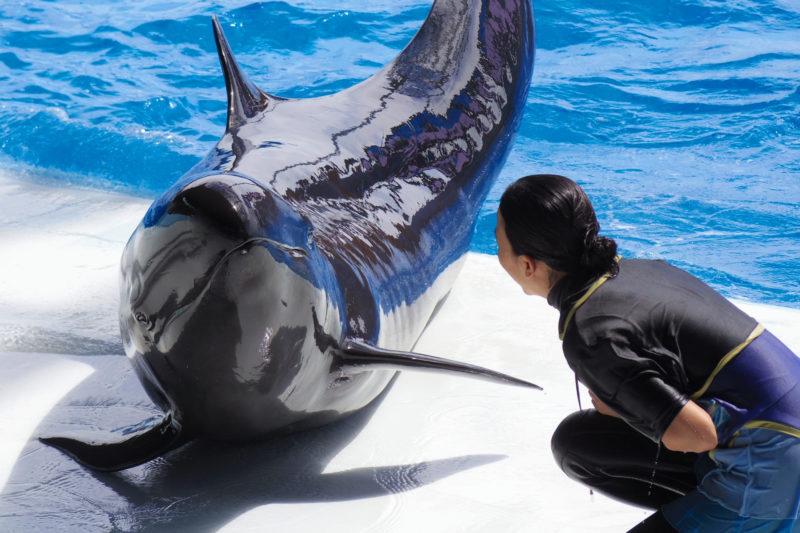 水族館でイルカショーの練習でイルカに話しかけているお姉さん