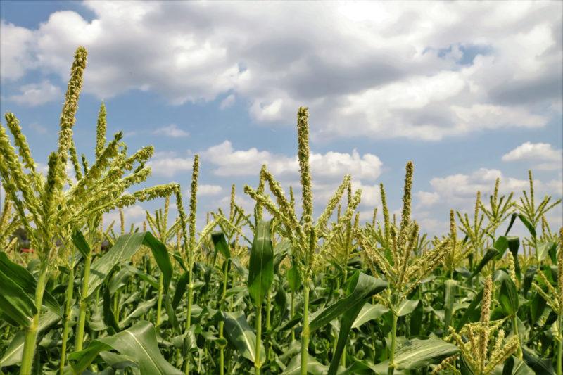 アトピー肌を保温で改善するセラミド トウモロコシ
